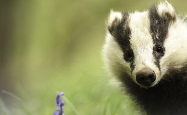 Protected Species Surveys